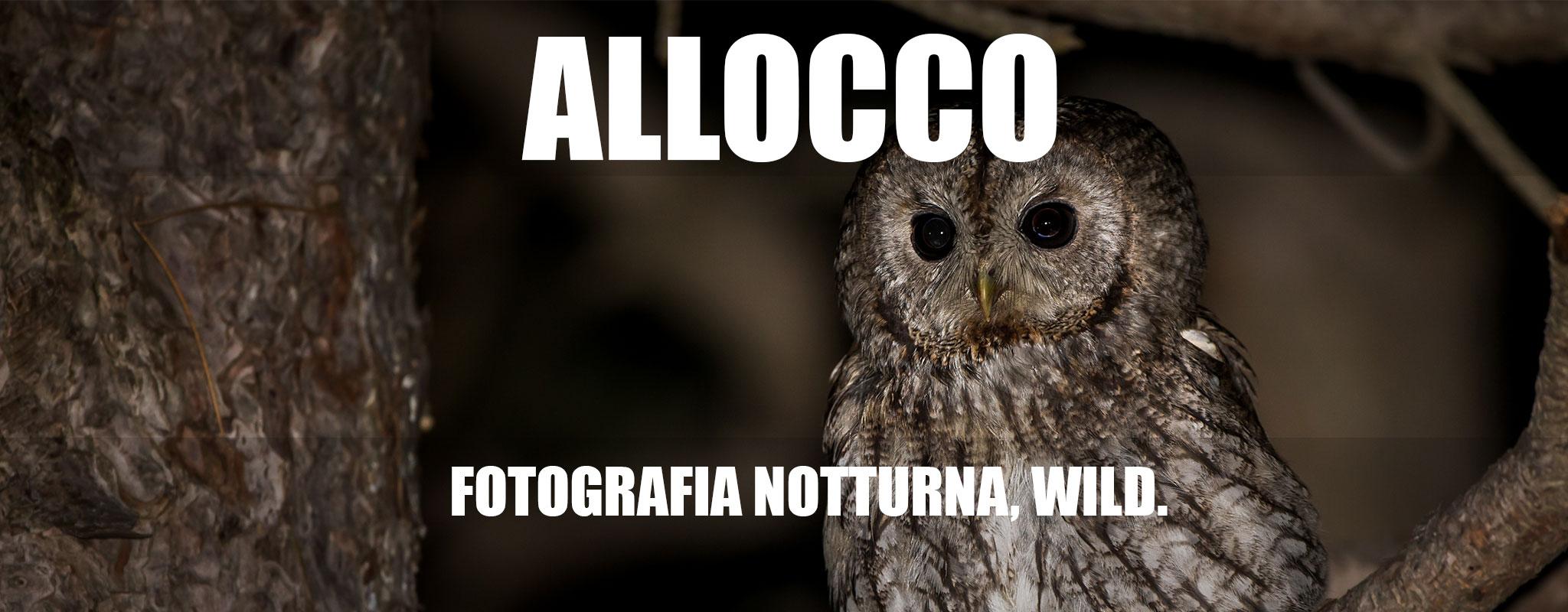 allocco-banner